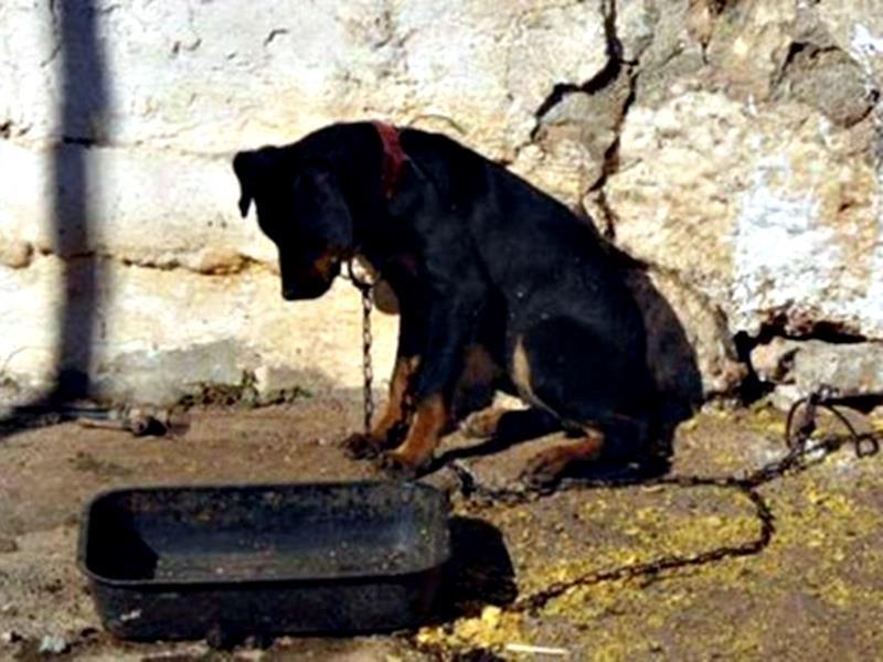 Η διαδικασία για καταγγελίες κακοποιήσεων ζώων | 24h.com.cy
